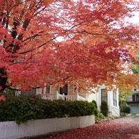 nevada city fall colors