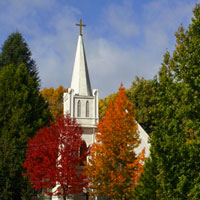nevada city tree tour