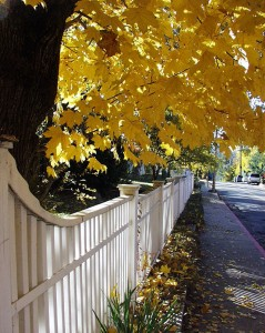 Fall Color Fence