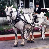 nevada city tours
