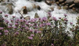 Trailes-Butterflies