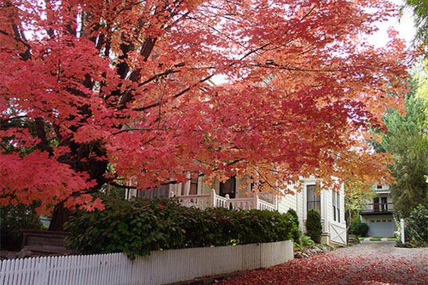 nevada city fall colors